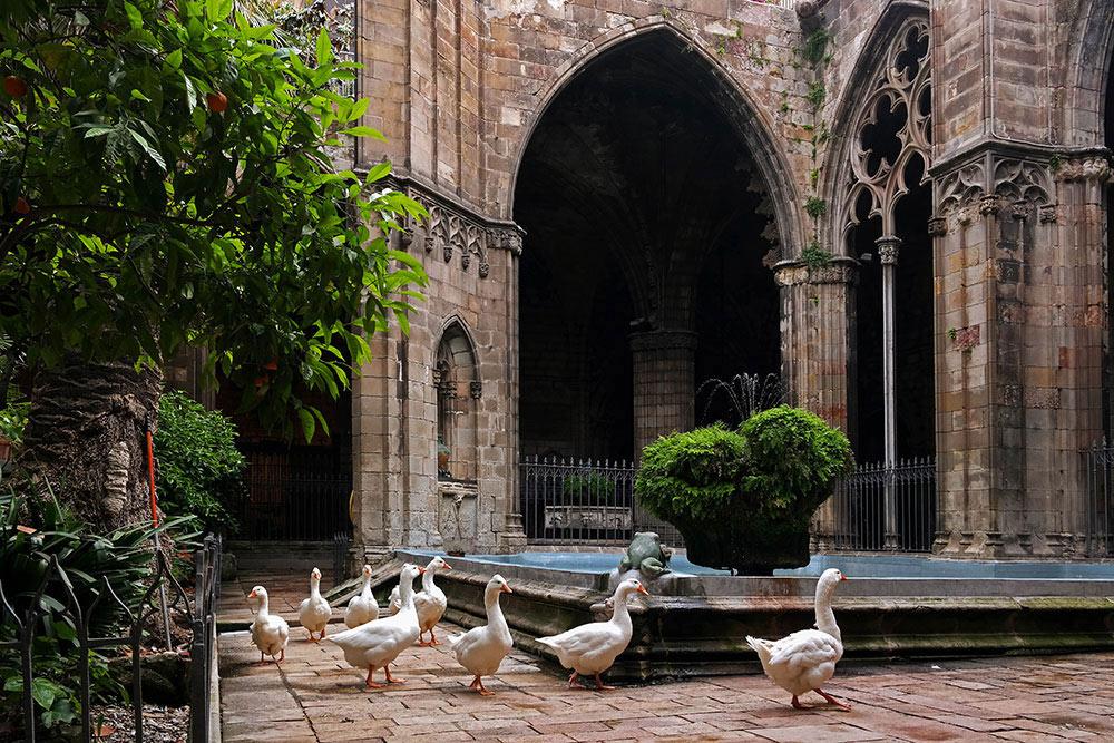 Claustro de la Catedral de Barcelona land poi